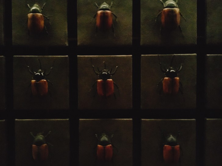 香港の虫バーJ.Boroski【虫嫌いの人は閲覧注意】